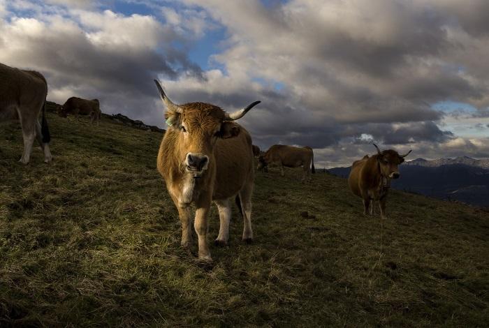 noticias asturias sostenible